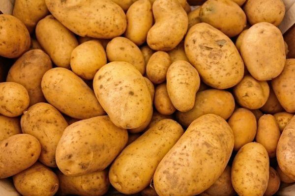 Food Waste Facts blog images 1