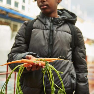 Boy carrots schools